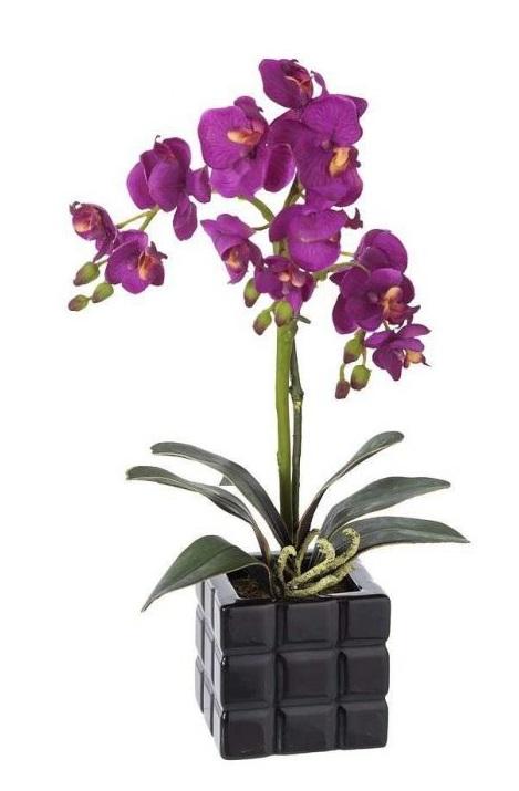 Orquídeas a domicilio